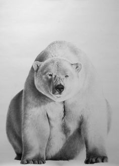 Award winning, luxury wildlife artwork by Carla Grace Art. Australia based artist Carla Grace paints breathtaking realistic wildlife paintings of animals from all over the globe. Polar Bear Drawing, Grace Art, Christmas Gifts For Teen Girls, Teen Art, Body Sketches, Wildlife Paintings, Easy Drawings, Saatchi Art, My Arts