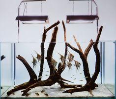 Altum's & driftwood