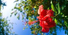 Dhiffushi, Maldives Maldives, The Locals, Happy Life, Perfect Place, Island, Flowers, Plants, Beautiful, The Maldives