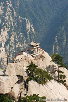 Huashan4:  This has to be the best tea in the whole world. Even though I respect their right to climb this mountain for tea, I can't think of one thing that would make me risk my life other than to save someone that I REALLY TRULY LOVE and would do the same for me. And believe me, there ain't that many either way.