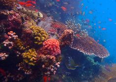 #Diving  #PengaIsland in the #Komodo Nationalpark