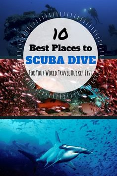 The Best Scuba Diving In The World Top Locations Scubas - The 10 best scuba diving locations in the world