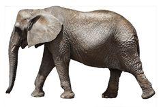 elephant white baground - Google Search