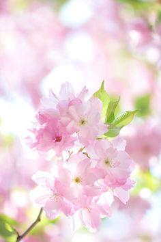 miizukizu:By: さくら / *Sakura*(Do not remove credits)