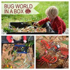 Bug world in a box