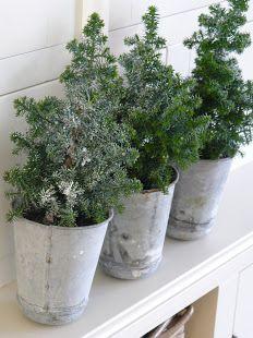 mini trees in metal buckets