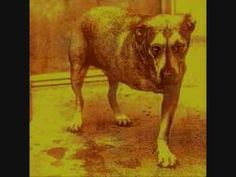 Alice In Chains - Heaven Beside You (Lyrics)
