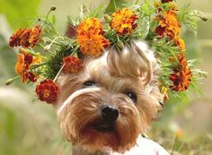 Flower Crowns, Flower Girls, Sweet Little Things, Shades Of Yellow, Marigold, Puppys, Beautiful Creatures, Pet Birds, Animals And Pets