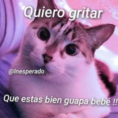 Cute Cat Memes, Love Memes, Cute Phrases, Foto Jungkook, Stranger Things Netflix, Spanish Memes, Country Art, Happy Moments, Funny Love