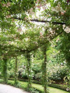 Wirtz International's Alnwick Garden.
