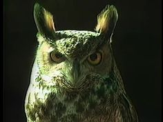 ▶ Owl -- I Do Not Know What It Is I Am Like (1986) - YouTube