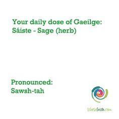 Irish word is for Sage Gaelic Words, Irish Language, Irish Celtic, Proud Of Me, Beautiful Words, Languages, Vocabulary, Sage, Scotland