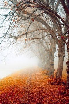 Hazy Fall Day photography nature trees autumn fog leaves fall beauty cold weather hazy