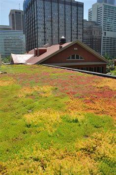 'Friends Center' (Pennsylvania) green roof by Charlie Miller, P.E., internationally regarded green roof pioneer