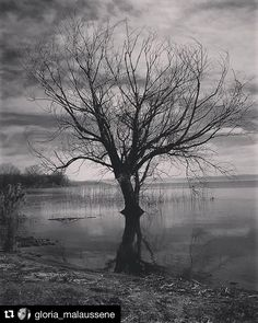 #Repost @gloria_malaussene  The tree of Life #tree #treeoflife #trasimenolake #altrasimeno #lakelove #lakelife #umbrians #umbrialovers #igperugia #igumbria #igersperugia #igersumbria #loves_united_perugia #loves_united_umbria #loves_united_life #likes_umbria #blackandwhite #bnw_italia #bnw_umbria