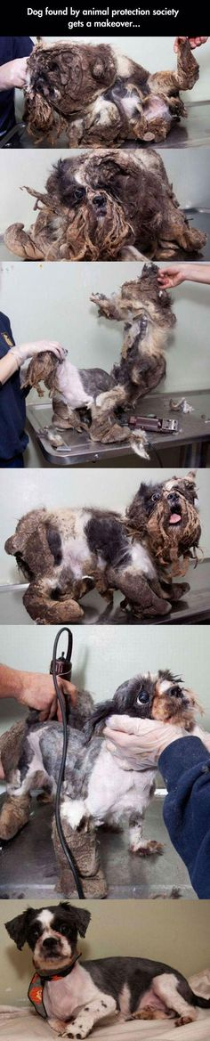 A Dog Saved By Animal Protection Society. Didn't Realize It Was A Dog Until I Saw The Last Picture.