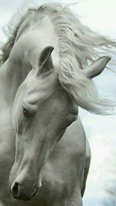 nice horse so beautifull