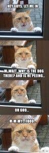 dog peeing on cat's food