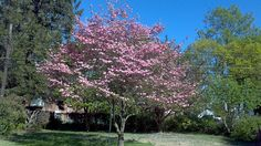 A Beautiful Day in the Country by Tom Ipri, via Flickr