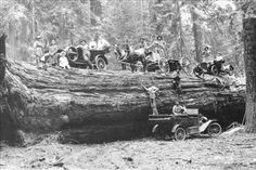Giant Log