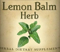 LEMON BALM HERB Tincture for Upset Stomach Nerves & Immune System Natural Support Single Herbal Liquid Extract USA