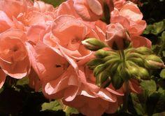 Rosé ist die Farbe des Sommers!!!