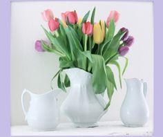 beautiful tulips vase