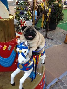 """mugsofpugs:  """"I want to ride it again! Please, please, please, please! One more time!"""""""