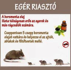Emlékezetes Facebook képek 5 Note To Self, Earth, Animals, Facebook, Animales, Animaux, Animal, Animais, Mother Goddess