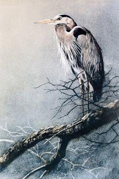 Robert Bateman Great Blue Heron original Lithograph