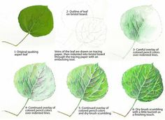 PINTEREST com dibuixar arbres http://www.pinterest.com/dderoll/tutorial-trees-1-leaves-grasses/