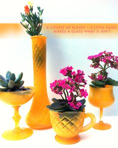 Little plants in yellow cups and vases. -Justina Blakeney: plantastic