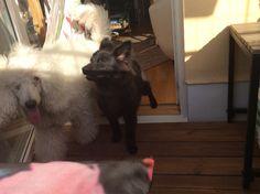 elizabethsvendsen.blogg.se - Vad kommer att hända under 2014. Här skriver jag om vad som händer i mitt liv. Med min familj hundar resor allt som jag vill dela med mig.