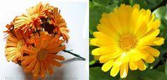 Regina Ribeiro: flores em papel