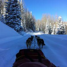 dogsledding through Narnia