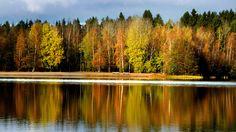Loppukesällä luonto alkaa valmistautua talveen, joka tarkoittaa kasveille ja eläimille erityisesti kylmyyden ja kuivuuden sietämistä. Ruskan merkitys ei ole täysin tiedossa. Erään teorian mukaan se olisi puun tapa hämätä hyönteisiä viestittämällä, että se on kuolemassa.