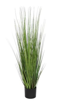 Tall Artificial Ornamental Plants Fake Grass Pot Faux Botanical for Home Indoor Outside Garden Office Decor Boxwood Plant, Dracaena Plant, Topiary Plants, Potted Trees, Artificial Boxwood, Artificial Tree, Artificial Flowers, Ornamental Plants, Foliage Plants