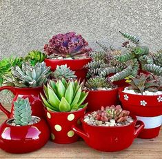 These beautiful succulent plants are great for those who are looking to dress up their home a bit. These 15 succulent displays are AMAZING! Succulents In Containers, Cacti And Succulents, Planting Succulents, Cactus Plants, Planting Flowers, Succulent Display, Succulent Arrangements, Painted Clay Pots, Decoration Plante