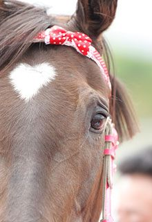 horse.heart.perfection
