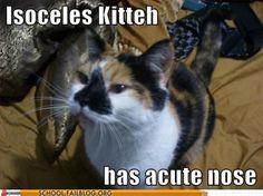 Kitties + math = <3