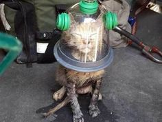 Cat wearing a special oxygen mask after being rescued from a house fire