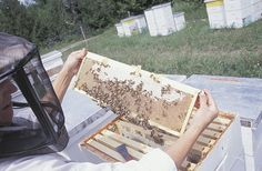 Learn how to build a bee hive. Part of the Beekeeping 101 series on Almanac.com.