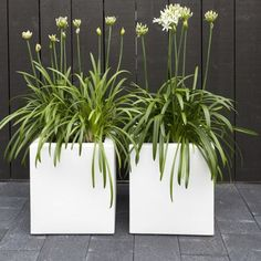 Adezz Aluminium Garden Planter Florida White Cube Planter