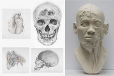 Introduction + msc human anatomy and forensic art