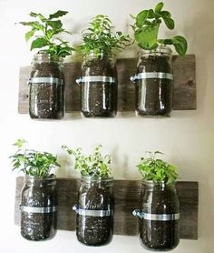 Herbs in the kitchen great idea