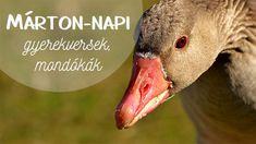 Nap, Education, Children, Animals, Halloween, Young Children, Boys, Animales, Animaux