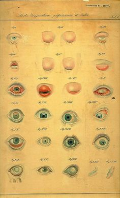 From The James Moore Ball Collection, National Museum of Health and Medicine Nocturne, James Moore, Iris, Health Pictures, Fitness Pictures, Medical Anatomy, Vintage Medical, Human Eye, Anatomy Art