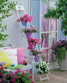 Um jardim para cuidar: É tempo de petúnias...