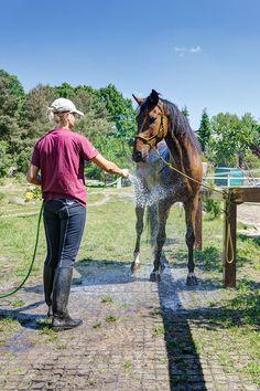 Dzięki wodoprzepuszczalności nawierzchni wzmocnionej kratką geoSYSTEM woda z kąpieli konia jest wchłaniana przez glebę