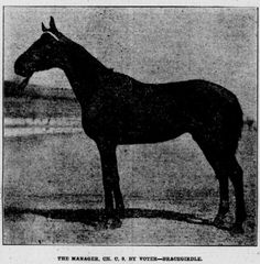 The Manager (1909-?).  1912 Horse of the Year